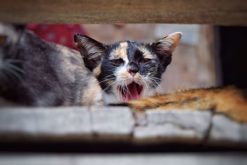 Portrait Of Kittens Yawning On Balcony