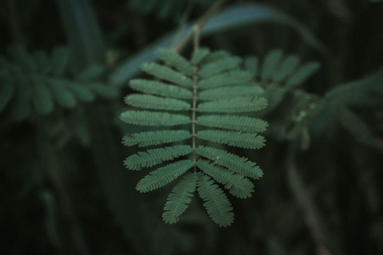 Close-Up Of Leaves In Forest