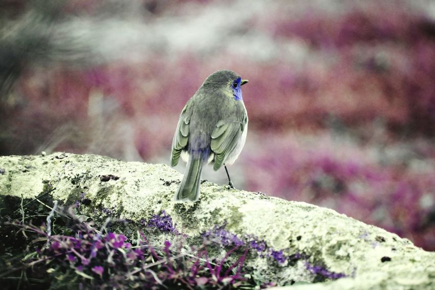 Bird Animals In The Wild Animal Themes Animal Nature Rouge Gorge Color Purple Color Jardin Garden