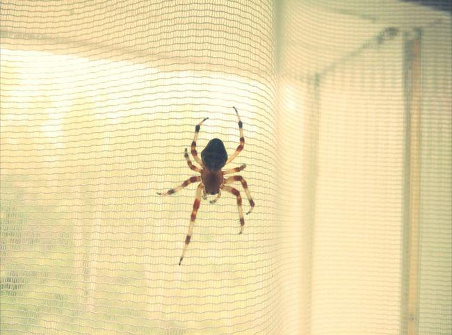 Spider Boo!