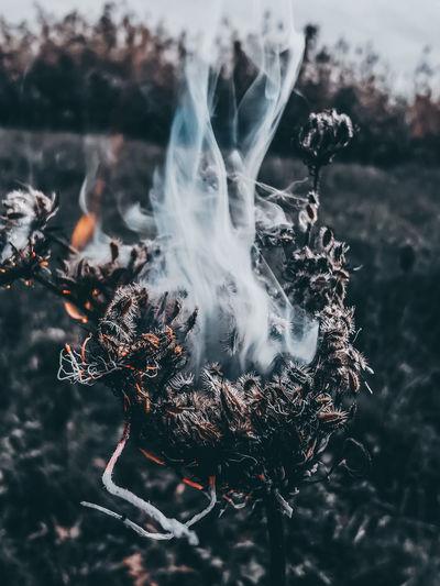 Close-up of smoke emitting from tree