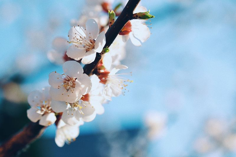Spring blossom Blossom Tree Spring Is Coming  Springtime Spring Flowers Apple Blossom Plant Tree Growth Close-up Flowering Plant Beauty In Nature Fragility Flower No People Freshness Nature Day Focus On Foreground Springtime White Color Blossom Inflorescence Vulnerability