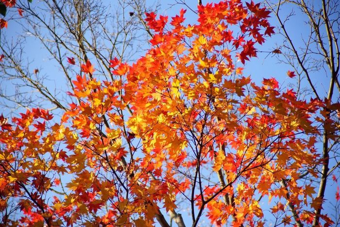 Autumn Colors Blue Red and Yellow
