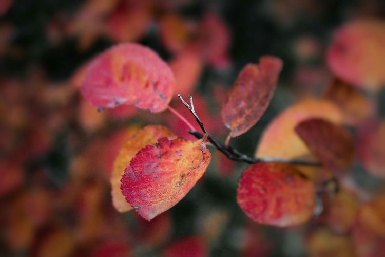 Colors of Autumn. Eyem Best Shots Nature Open Edit EyeEm Gallery Macro World Sweden Photography Autumn Fall Beauty