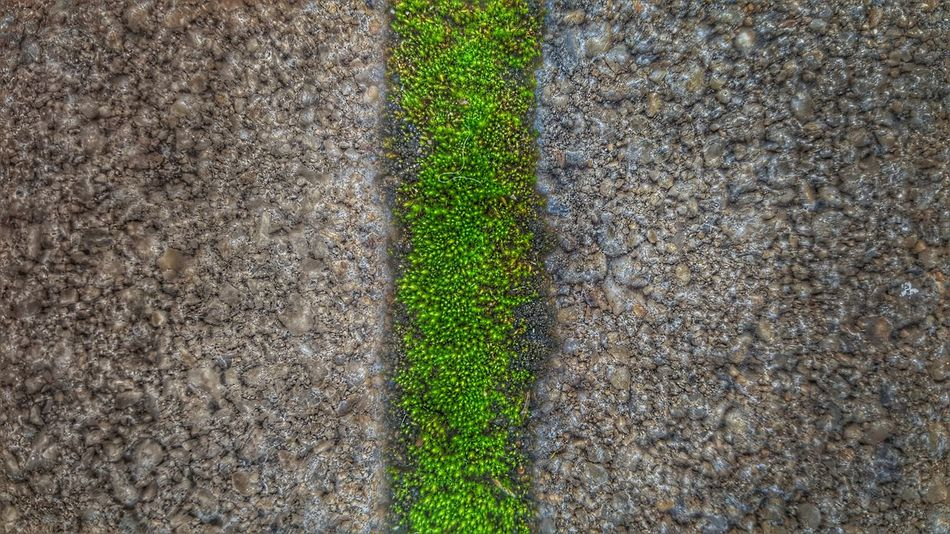 Mossy Moss Green Green Color Green Color LINE Lines Green Nature Nature Green Road Half Three Middle Moss Close Up Bicolors Bicolor Little Things