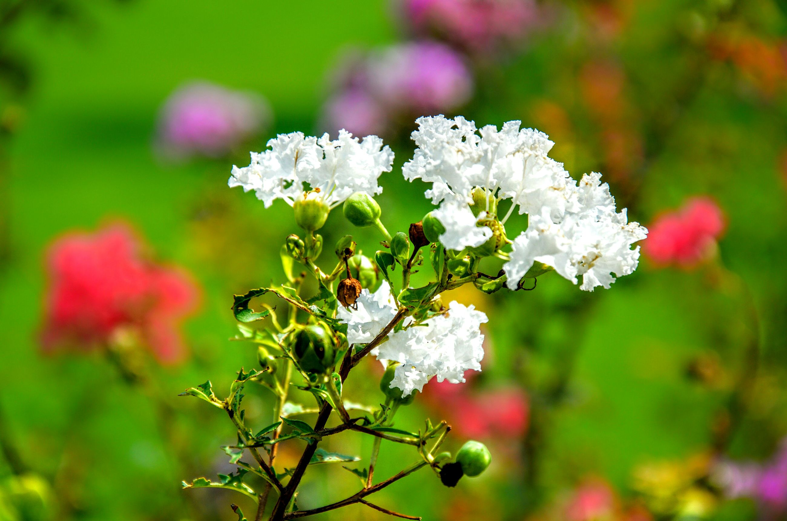 flower, freshness, growth, fragility, focus on foreground, beauty in nature, petal, close-up, nature, white color, flower head, blooming, plant, blossom, in bloom, branch, selective focus, springtime, day, outdoors