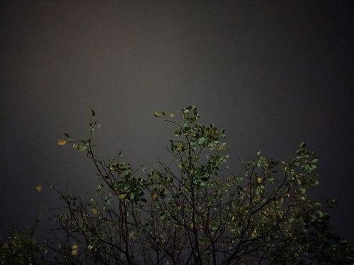 Bird Tree Water Lake Sky Animal Themes