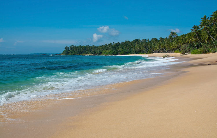 Paradise beach with green turquoise waves, coconut palm trees and fine untouched sand, Southern Province, Sri Lanka, Asia. Coconut Palms Green Pristine Sri Lanka Sunny Beach Beauty In Nature Blue Day Holiday Horizon Over Water Nature No People Outdoors Paradise Sand Sandy Scenics Sea Shore Sky Tranquility Tree Tropical Turquoise Water Wave Waves