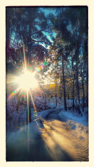 Winter day Winter Day Winter Day Snow Snow ❄ Sun Sunlight Forest Beauty In Nature Nature Outdoors No People Trees Road Sun Beems Farsta Stockholm Sweden Godaminnen
