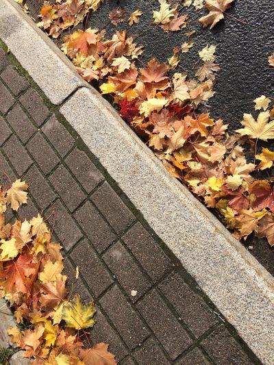 Листья осенние листья желтые осень опавшиелистья Autumn Change Plant Part High Angle View Leaf Day