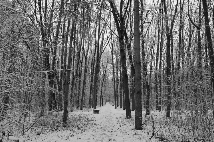 Into the woods #2 Winter Walk Nature EyeEmNewHere EyeEm Nature Lover Tree Snow Cold Temperature Winter Forest Snow Covered Cold White