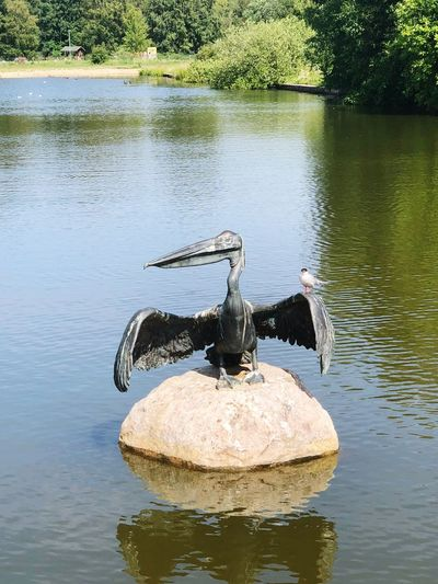 Pelikan Statue Statues Bird Water Lake No People Plant Tree Reflection Nature Animal Themes Outdoors Waterfront Animal Wildlife Tranquility Beauty In Nature Animals In The Wild