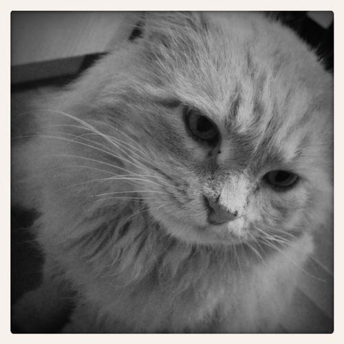 Cat Hobo.