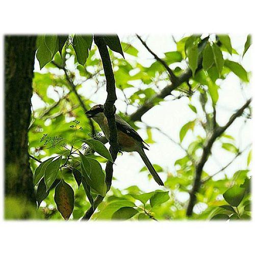 🐦 (24ºc)暑いくらいの午後です🎶☺ 🎶Hot much of the afternoon ※ 昨日木曽三川公園にいた小鳥です。すばしっこく撮るのにぐるぐる駆けずり回ってこの程度((汗)🐦It is a small bird that was in yesterday Kiso Three Rivers Park. ※ 木曽三川公園 KisoThreeRiversPark 風景 Landscape 自然 Nature 小鳥 Smallbird 日本 Japan Aichi 眺め 眺望 View 展望 Outlook Vista 景色 Scenery 綺麗 Beautiful 爽やか Refreshing 😚 View_Japan_nagoya_mitu