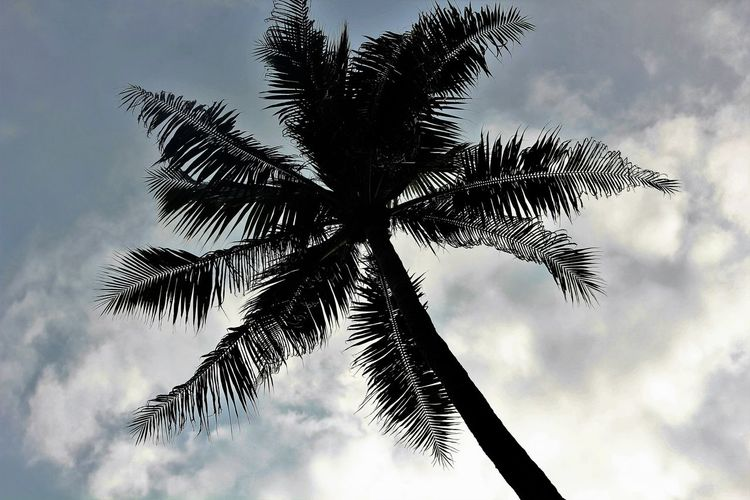 The tall palm tree clicked against the sky Beauty In Nature Bintan Island Cloud - Sky Low Angle View Nature Palm Tree Scenics Tall - High The Palm Trees Against The Sky Tranquil Scene Tree Trunk