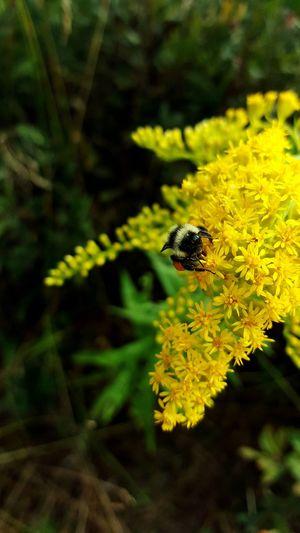 Bee Flower Beautiful Long Walks Naturelovers