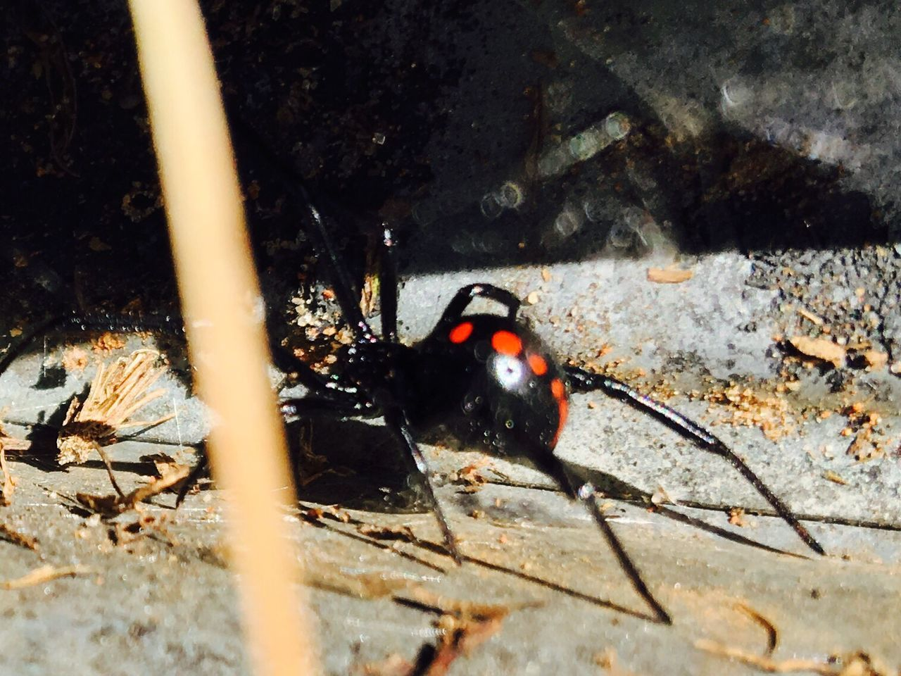 animal themes, one animal, animals in the wild, animal wildlife, day, no people, insect, outdoors, nature, close-up