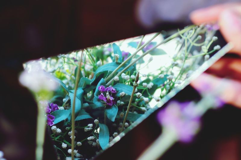 Close-up of purple flowering plant on table