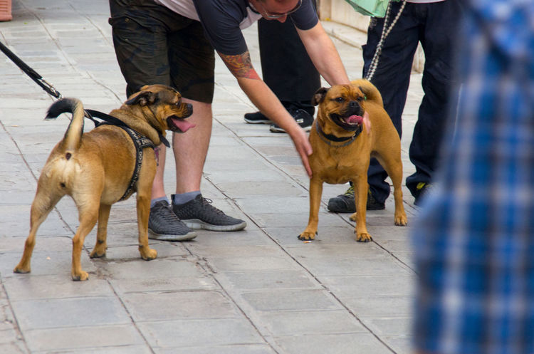 Adult City Day Dog Dog Lead Domestic Animals Europe German Shepherd Human Leg Italy Low Section Mammal Men Obedience One Animal One Man Only One Person Outdoors Pet Collar Pet Leash Pets Real People Travel Venice Venice, Italy