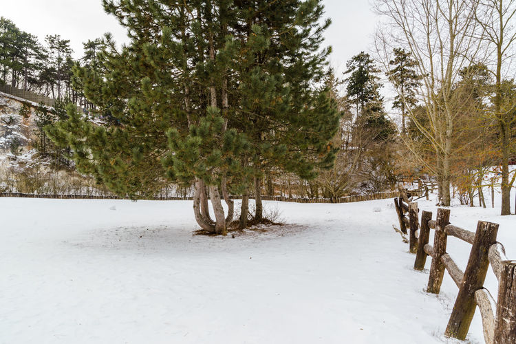 Snow Tree Winter Cold Temperature Plant Land Scenics - Nature Nature Beauty In Nature Tranquility Day Tranquil Scene Environment No People Non-urban Scene Growth Covering Landscape White Color Outdoors