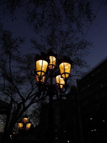 Farolas EyeEmNewHere The Purist (no Edit, No Filter) Night Low Angle View Lighting Equipment Illuminated Electric Light Street Light No People Tree City