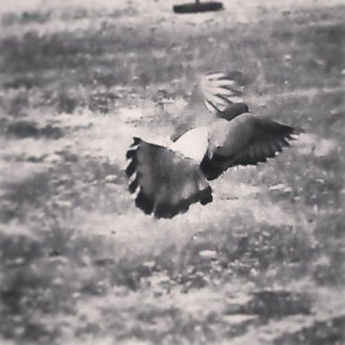 Dotspin Betosalvestrini Art Original Natural Nature Animals Birds Freedom Free Venezuela Sancristobal
