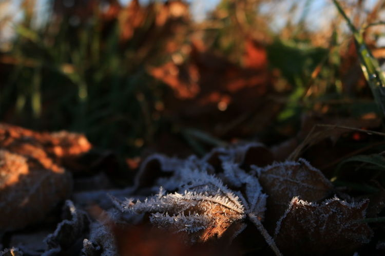 Close-up of snow on field during autumn