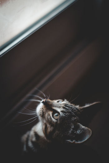 Close-up of a cat looking at the window