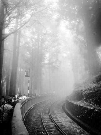 Fog The Way Forward Walking Rail Transportation Railway Track Weather Tree Foggy Straight Dawn Nature Person Outdoors