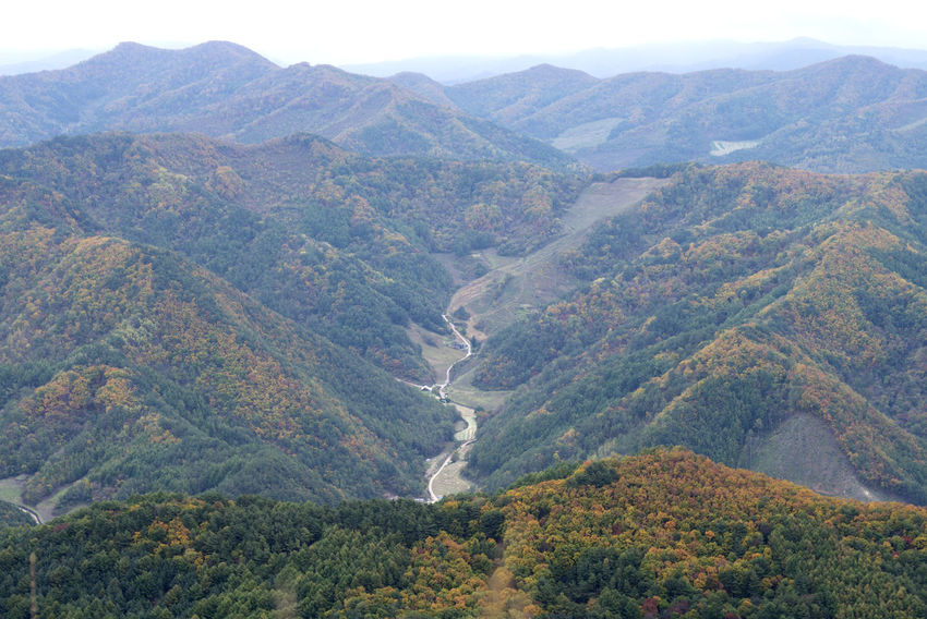 autumn landscape of Mindeungsan Mountain in Jeongseon, Gangwondo, South Korea. Mindeungsan is famous for autumn silver grass. Jeongseon Mindeungsan Silver Grass Beauty In Nature Day High Angle View Landscape Mountain Mountain Range Nature No People Outdoors Scenics Silvergrass Tranquil Scene Tranquility