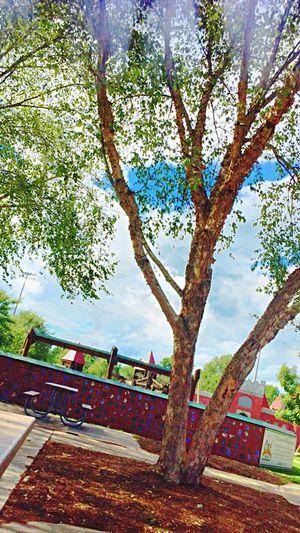 Parkkkkk Tree
