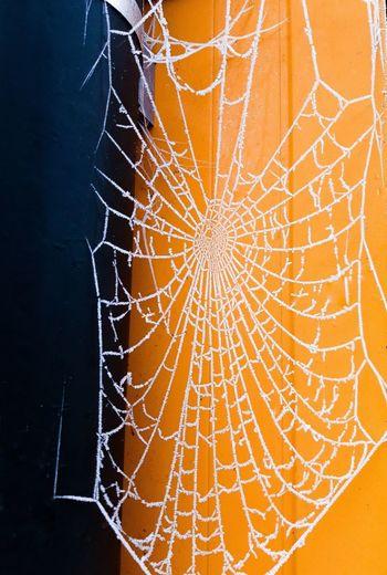 Frozen web Cold