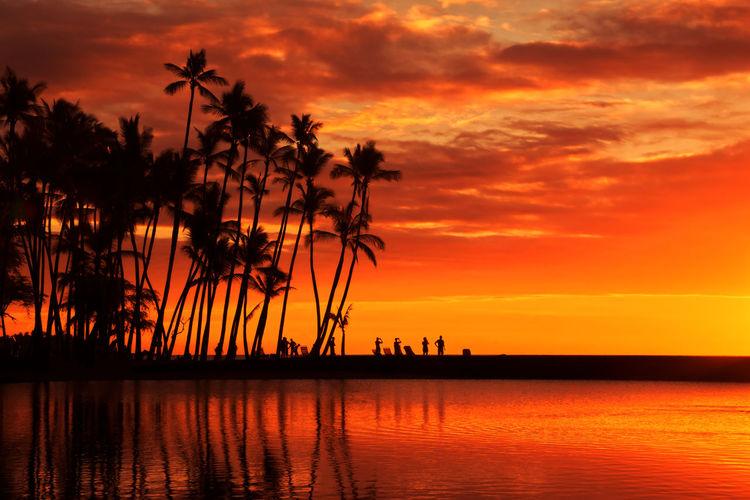 Sunset at ʻAnaehoʻomalu Beach Big Island Hawaii Beauty In Nature Cloud - Sky Coconut Palm Tree Dramatic Sky Nature No People Orange Color Outdoors Palm Tree Reflection Romantic Sky Scenics - Nature Sea Silhouette Sky Sunset Tropical Climate Water ʻAnaehoʻomalu Beach