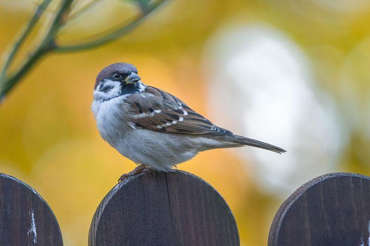 Close-up of bird perching on wood