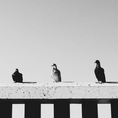 Birds Bird Photography Bird Blackandwhite
