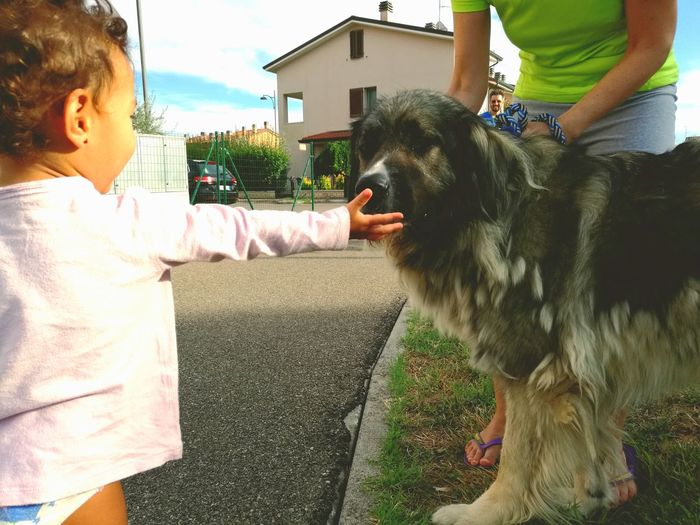 Primo incontro Dog Child Outdoors Real People
