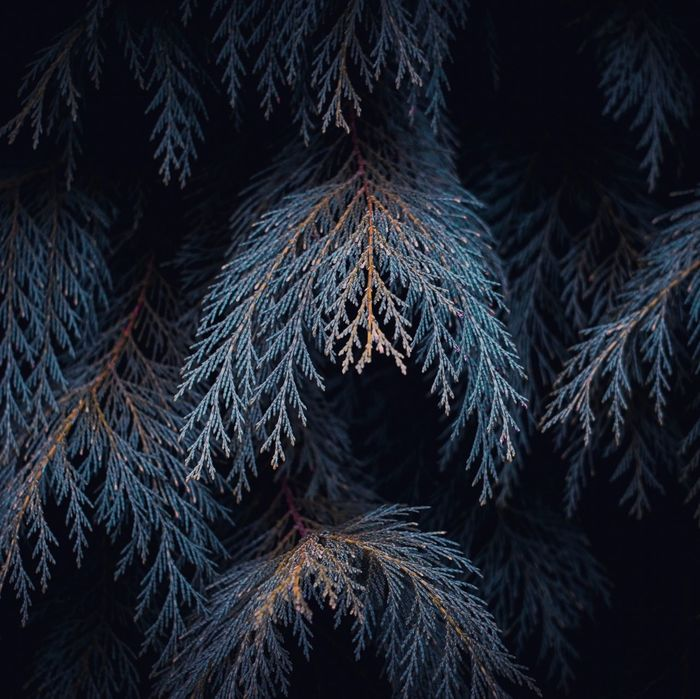 The abstract tree branches in the nature