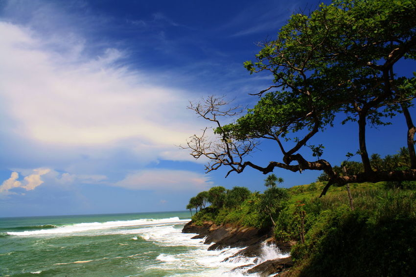 Fishing Spot in Karapyak Beach Pangandaran Beach Beauty In Nature Blue Branch Day Horizon Over Water Nature No People Outdoors Scenics Sea Sky Tranquil Scene Tranquility Tree Water
