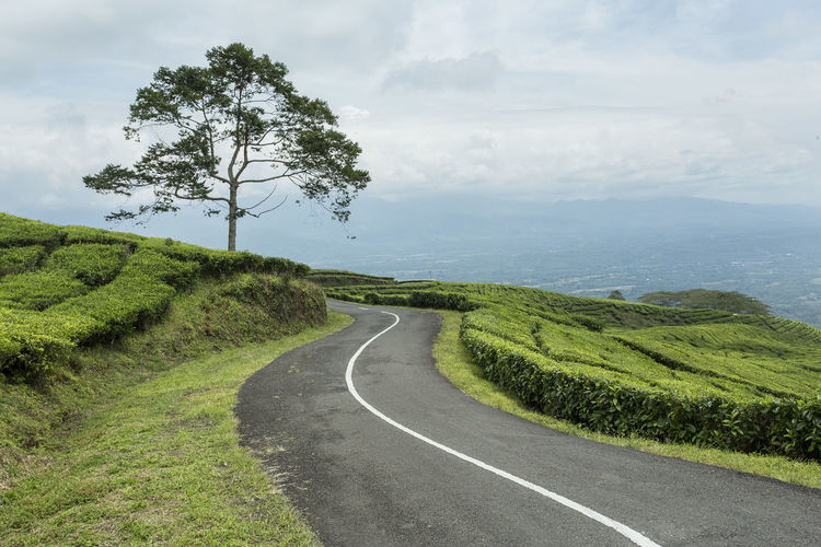 Scenic view of road by trees on field against sky