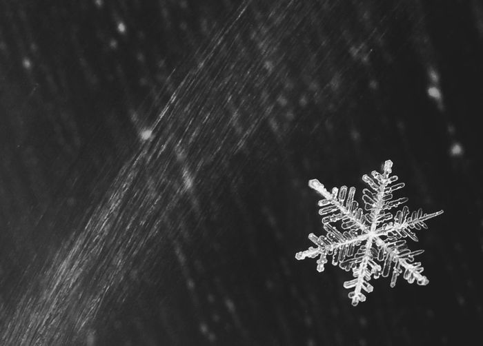Close-up of snowflake on wet surface