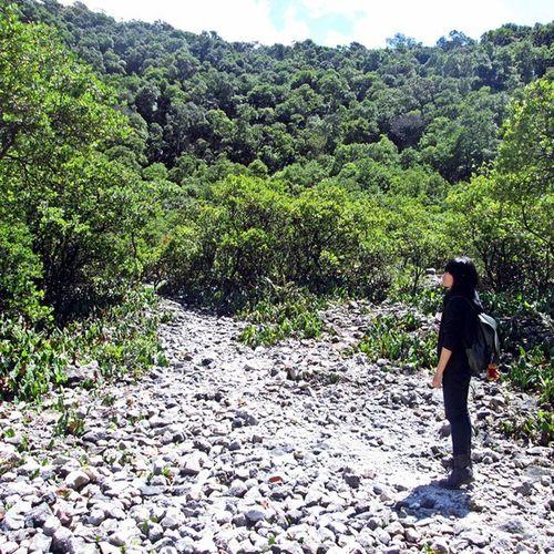 Nah ini, anak galau ditengah rerimbunan daun-daun hijau... Nature Trees INDONESIA
