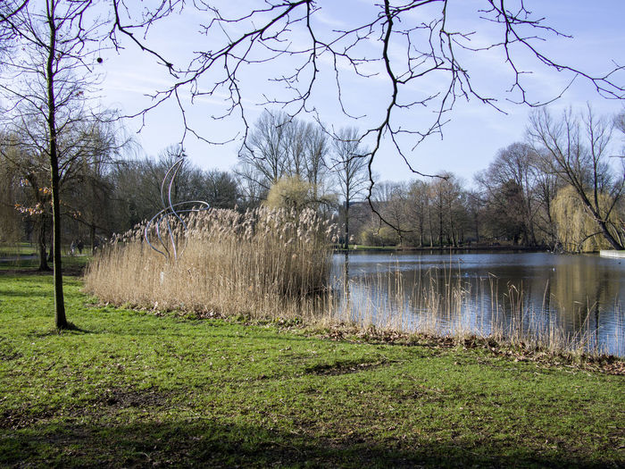 Plant Tree Grass Water Sky Tranquility Lake Nature No People Day Tranquil Scene Beauty In Nature Scenics - Nature Land Field Bare Tree Growth Outdoors Non-urban Scene Park Art Sculpture Abstract