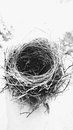 Nest Bird's Nest B&w Empty