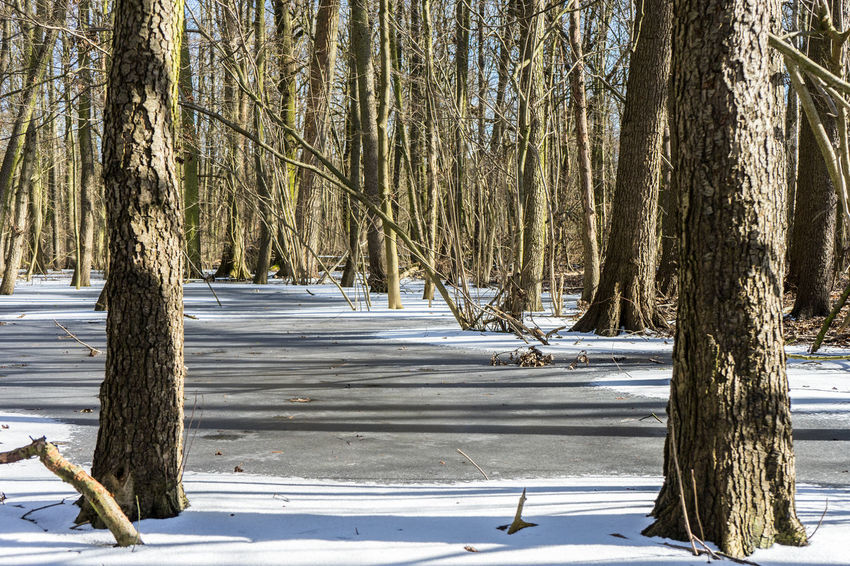 Winter forrest near Berlin Bare Tree Beauty In Nature Branch Cold Temperature Day Frozen Lake Landscape Nature No People Outdoors Scenics Snow Tranquil Scene Tranquility Tree Tree Trunk Water Weather Winter