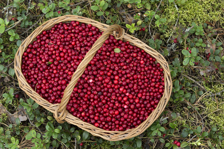 High angle view of cherries in basket on field