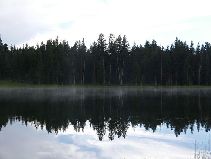 Dawn Dusk Fog Fog Over Water Foggy Lake Reflection Reflection Lake Reflection Trees Tranquil Scene Water Waterfront