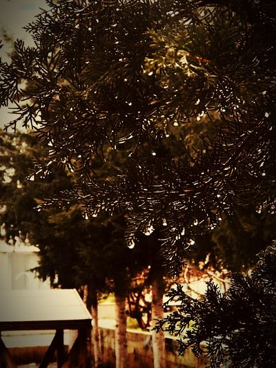 Yağmurdamlası Mersin Tree Plant Architecture No People Nature Sky Building Exterior Growth Built Structure Reflection Outdoors Water Branch Building Illuminated Silhouette Low Angle View Night City Redefining Menswear
