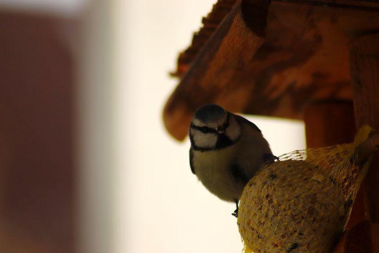 Close-up of bird perching on bread