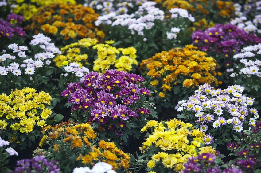 Multi color group of fresh flower