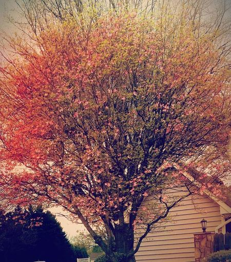 Tree No People Full Frame Backgrounds Nature Branch Growth Multi Colored Outdoors Beauty In Nature Day Flower Fragility Springtime Colour Of Life Easyliving Making Memories Sleepy Little Town Fickle Sky